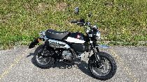 Motorrad kaufen Neufahrzeug HONDA Z 125 MA Monkey (naked)